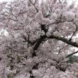 嵐山公園16