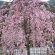嵐山公園28