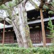 大徳寺 高桐院7