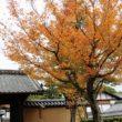 大徳寺 高桐院9
