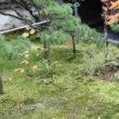 大徳寺 高桐院36
