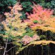 大徳寺 高桐院40