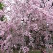 平野神社15