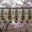 平野神社19