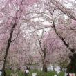 平野神社20