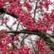 京都府立植物園35