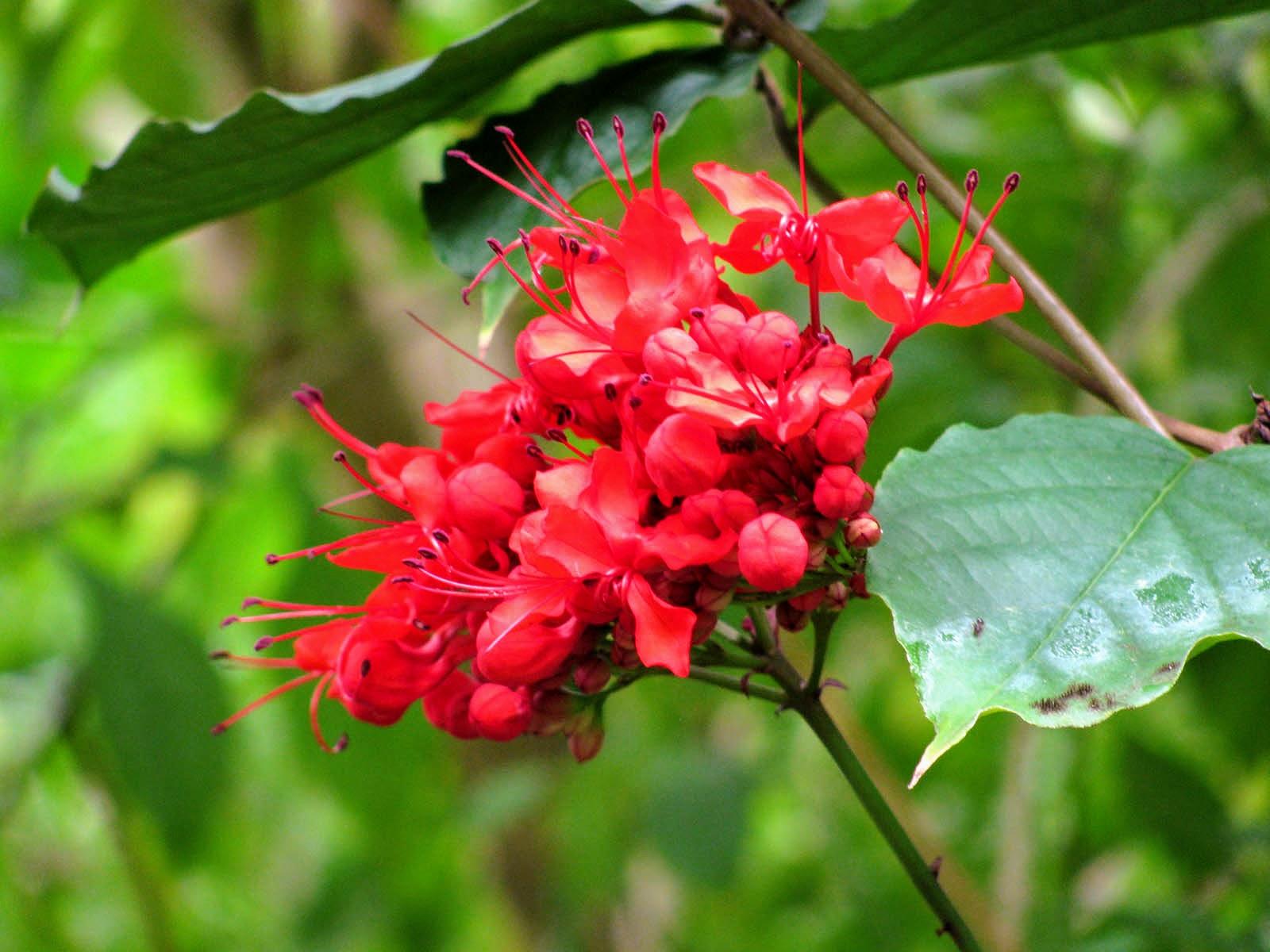 植物園の花の写真