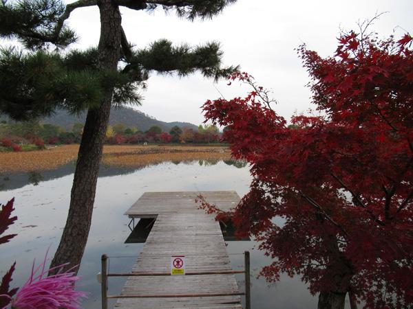大沢池の写真