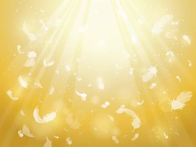 陽光と羽毛のイラスト